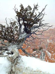 rim-bryce-canyon