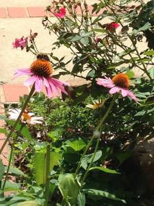 Busy Bee July 2015